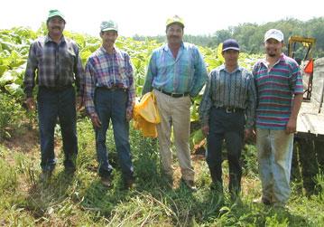 Migrant farmers