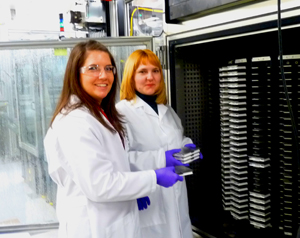 Collaborative experiments with the National Chemical Genomics Center are vital in generating data for Dr. Ivan Rusyn's research. Master's student Shannon O'Shea (above, left) and research specialist Oksana Kosyk traveled to the center to expose dozens of cell lines to various environmental chemicals, using the center's advanced robotic equipment.