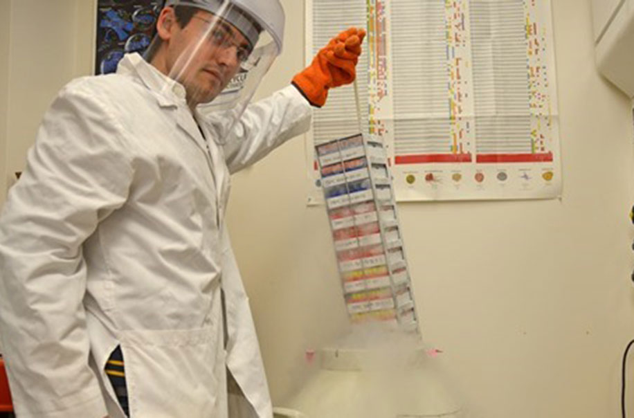 A researcher demonstrates how live cells are kept in storage.