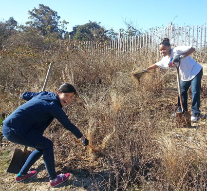 Linda Yang and Daria Lewis remove invasive plant species from a trail area.