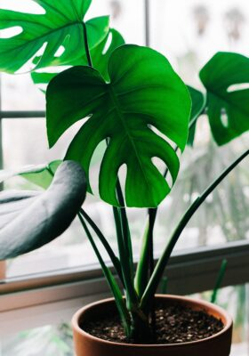A plant sits on a window sill.