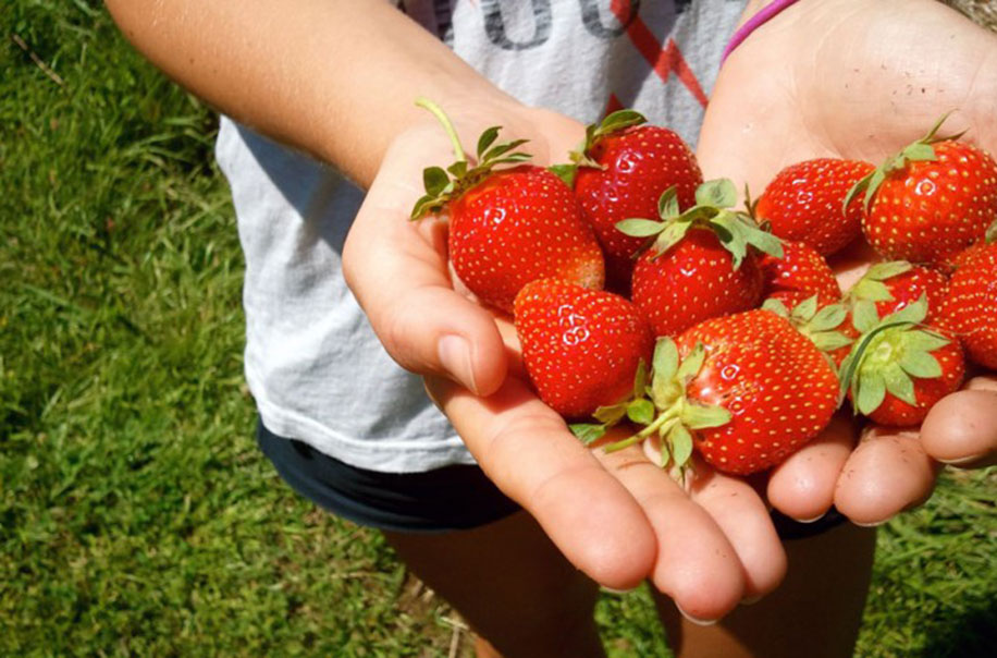 A person holds strawberries.
