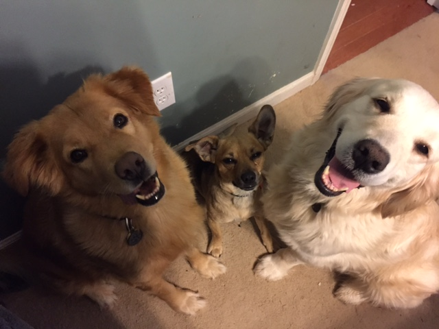 Katie loves her rescue dogs (L-R) Monkey, Peanut and Kasey.