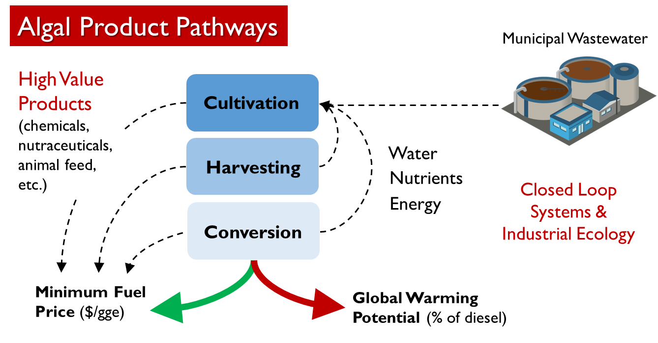 Algal product pathways graphic for the biofuels project.