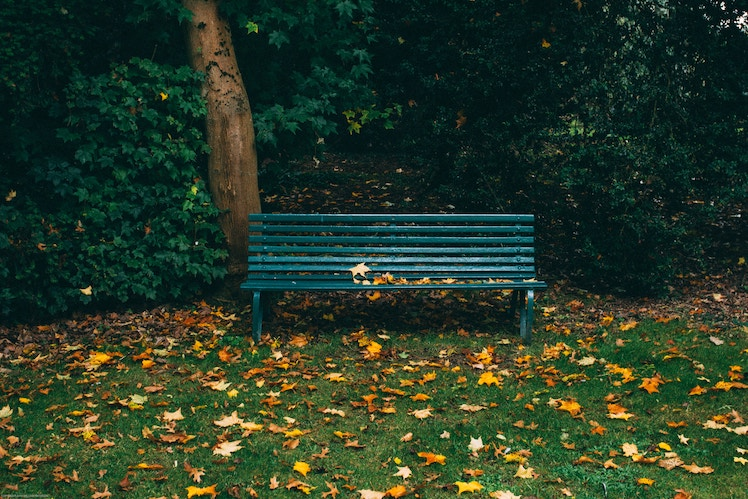 A bench sits unused in a park.