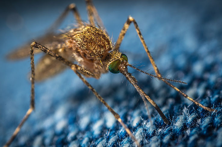 A mosquito lands on a textured blue fabric.