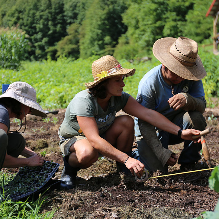 A group of people work on a farm.