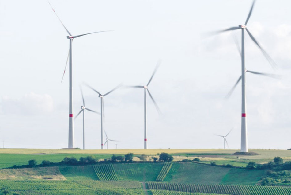 Windmills are scattered across a field.