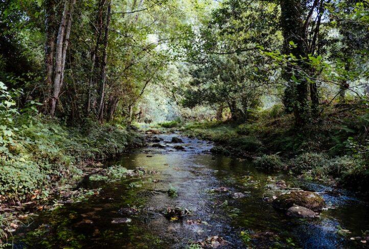 A stream runs through the woods.